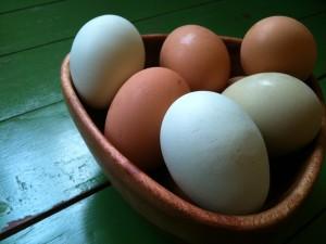 Farm fresh eggs from a private egg farm down the street